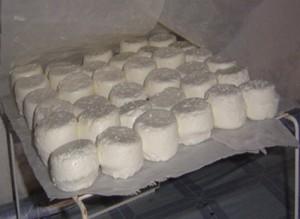 elevage-lait-2